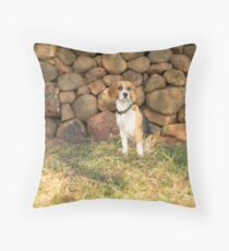 Roxie.... Beautiful Beagle.... Throw Pillow