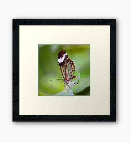 See Through Butterfly Framed Print