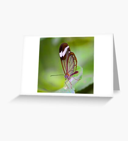See Through Butterfly Greeting Card