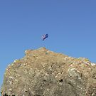 Australia Day Currumbin Beach by Virginia McGowan