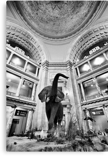 Natural History Museum - Washington DC by Michael  Bermingham