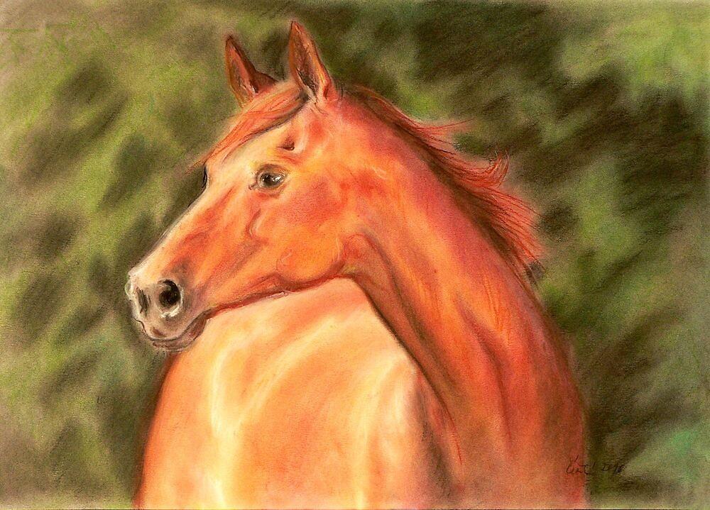 Sorrel horse by stepanka