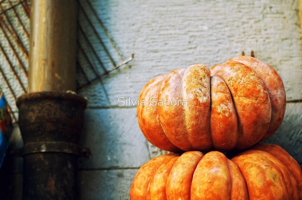 Pumpkins by Silvia Ganora