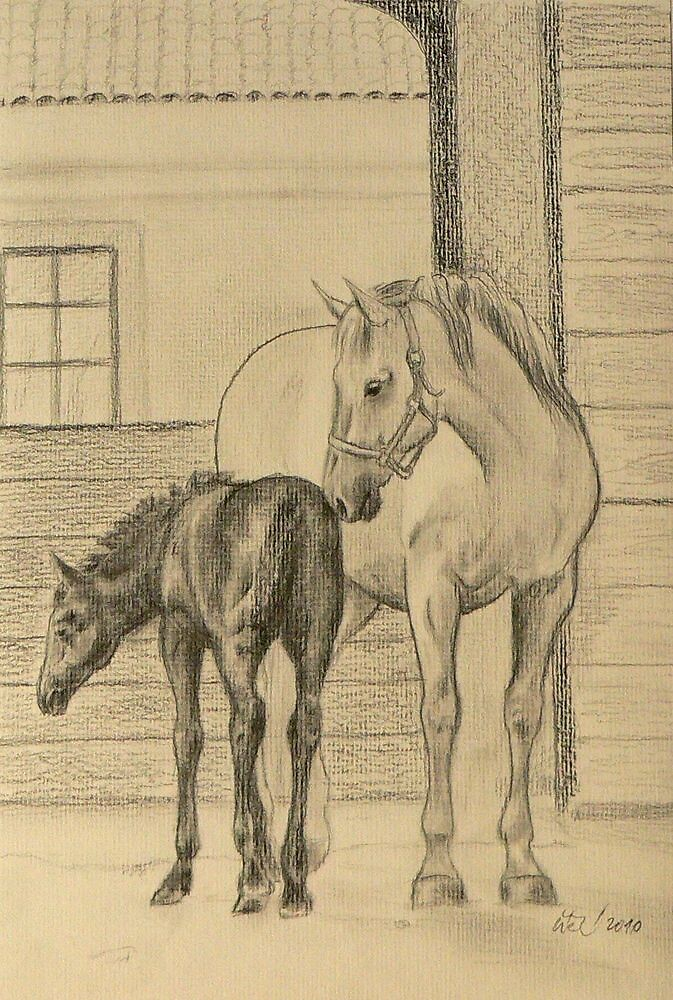 Mare with a foal by stepanka
