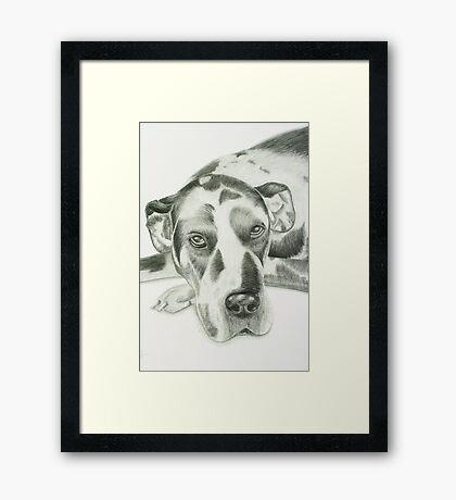 Harlequin Great Dane Framed Print