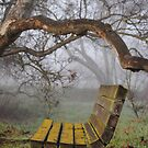 Natures Grandstand by Leah Highland