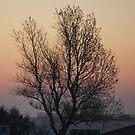 Tree at Sunrise by shane22