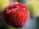 Strawberry Tree by Emma Holmes