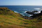 Phillip Island by Emma Holmes