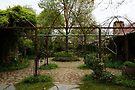 Garden by Emma Holmes