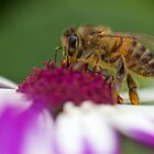 Busy Bee 2 by D-GaP
