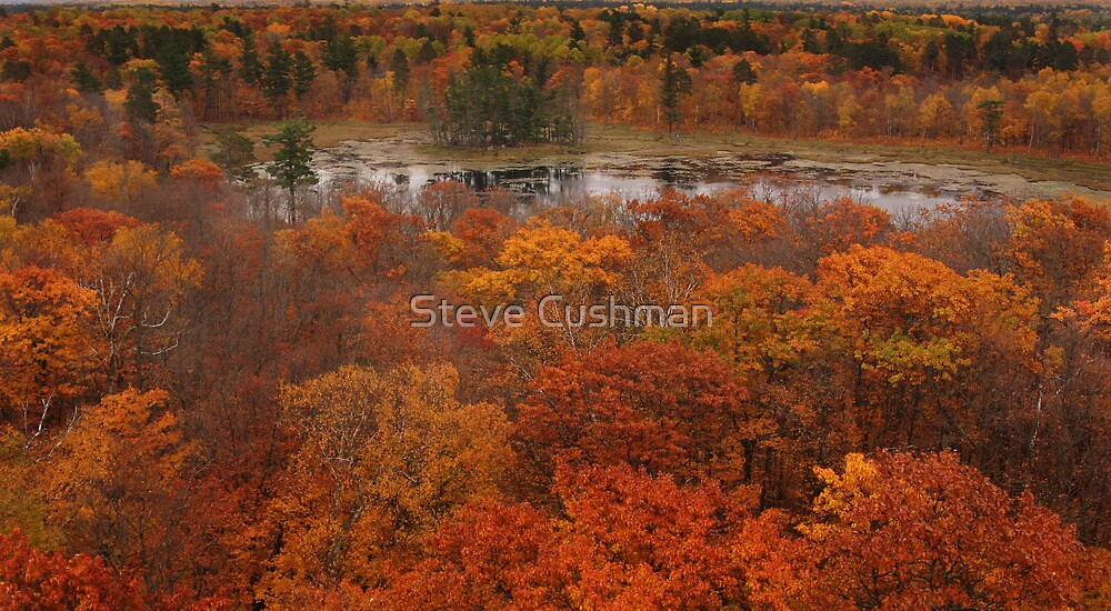 Lookout tower in the fall by Cushman