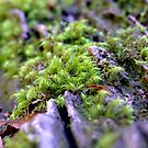 miniture forest by leahb