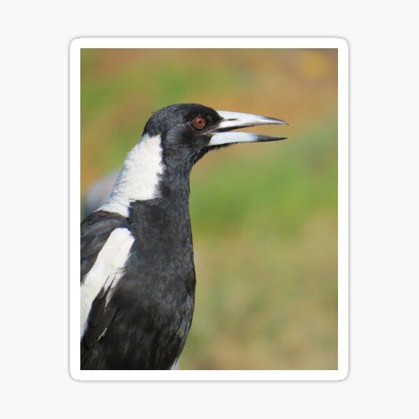 Australian Magpie Singing Sticker