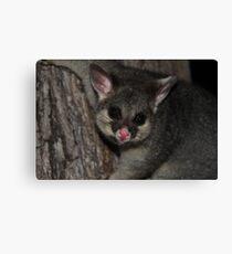 Possum Magic Canvas Print