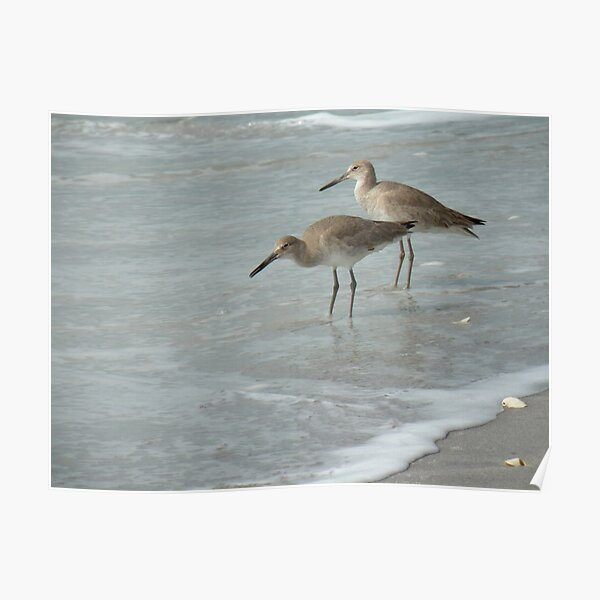 Willets by the Sea Poster