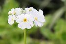Flora by Emma Holmes