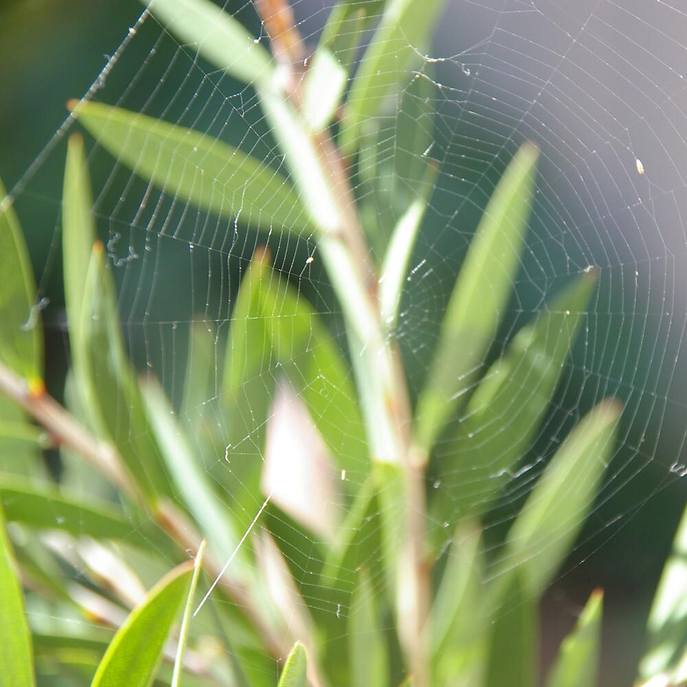 Spiderweb by Emma Newman