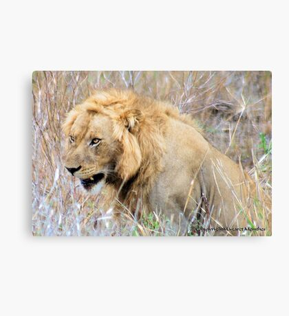 THE INCREDIBLE FORCE OF RESPECT - THE LION  - *Panthera leo* Canvas Print