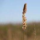 Grass by Emma Holmes