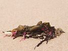 Washed Up by Emma Holmes