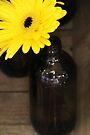 Gerbera Bottle by Emma Holmes