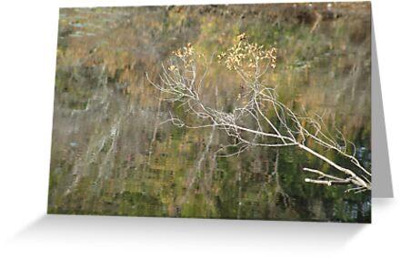 Little Branch by May Lattanzio