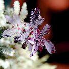 Purple Wattle Leaves by Emma Newman