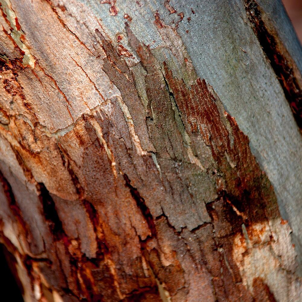 Gumtree Bark by Emma Newman