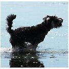 Dog Beach by Emma Holmes
