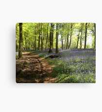 Bluebells in Lower Deans Wood, Oxfordshire Metal Print