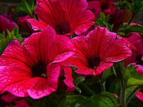 Fractalius Petunias by Trevor Kersley