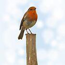 Robin by Richard Horsfield