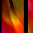 Tulip abstractions by Anna Creedon