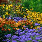 Flowers by Nature Flicks