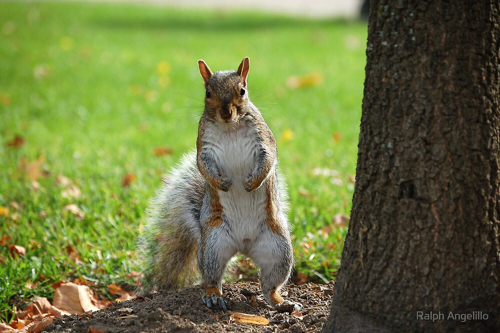 C'mon Ralph... I'll take peanuts, cachews, walnuts, anything ! by Ralph Angelillo