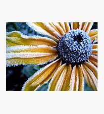 Yellow Ice Photographic Print