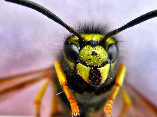 wasp by Bibi03