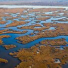 Louisiana Wetland by RayDevlin