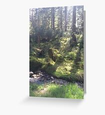Light on the Forest Floor, Achray Forest Greeting Card