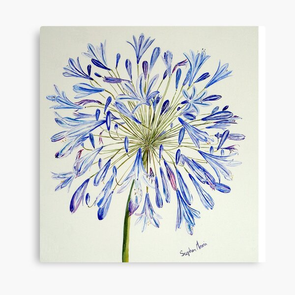 Isles of Scilly 'Agapanthus' Canvas Print
