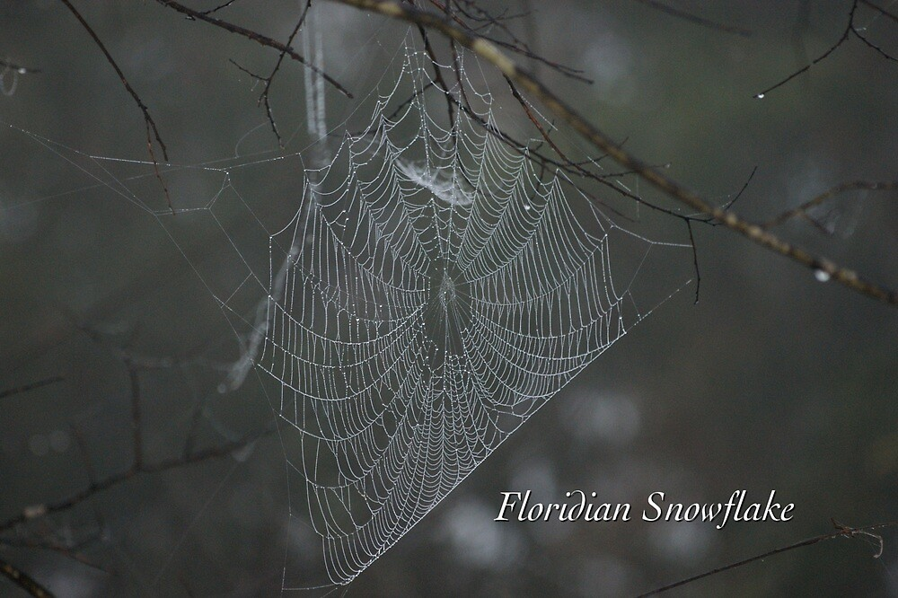 Floridian Snowflake by JpPhotos