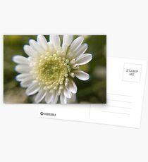White Flower Postcards
