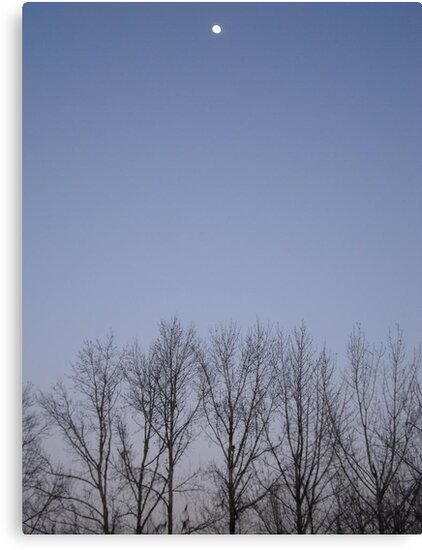 Bare Trees and a Three-quarter Moon by May Lattanzio