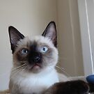 Kitten Henry by montecore827