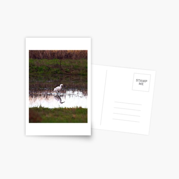 Two for one Postcard