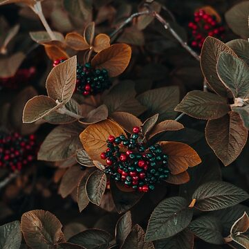Berry Bushes by hr1142