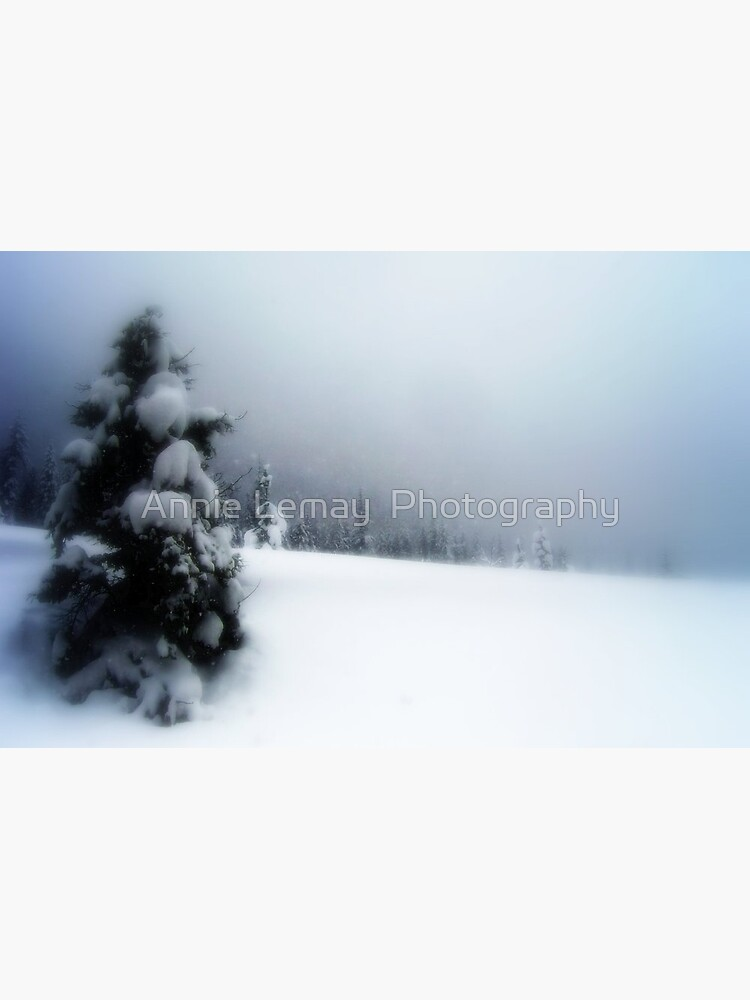 Winter Wonderland by ajlphotography