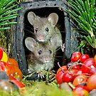two wild garden house mice in a log home by Simon-dell