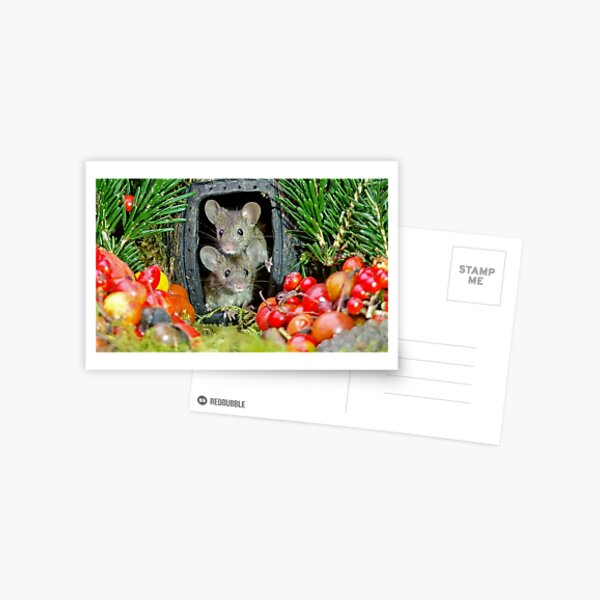 two wild garden house mice in a log home Postcard
